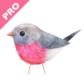 Robin PRO Image Gallery